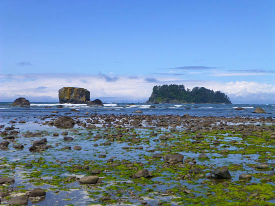 Low tide along Cape Alava